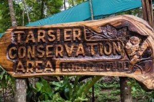The protected area tarsiers, Bohol Island